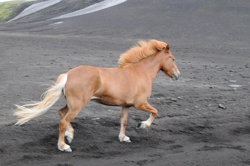 2011-islande-0414_2